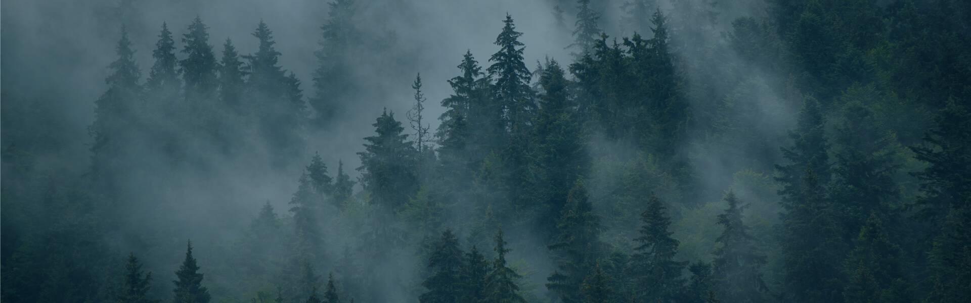 montagne brumeuse
