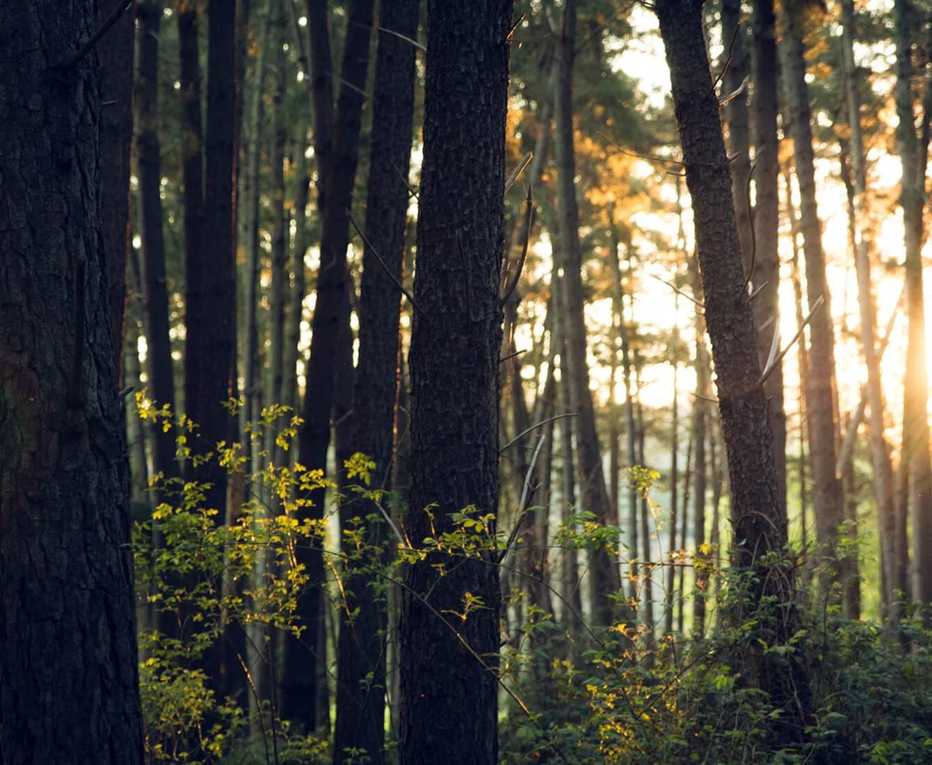 forêt d'allemagne