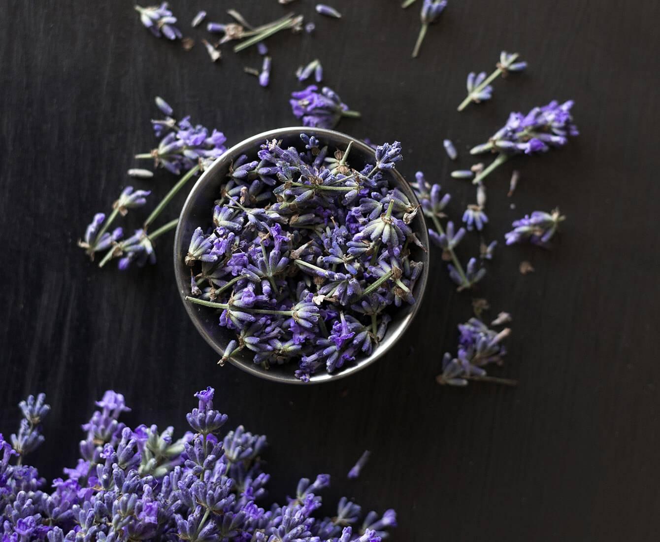 Soin holistique Förena, fleur de lavande